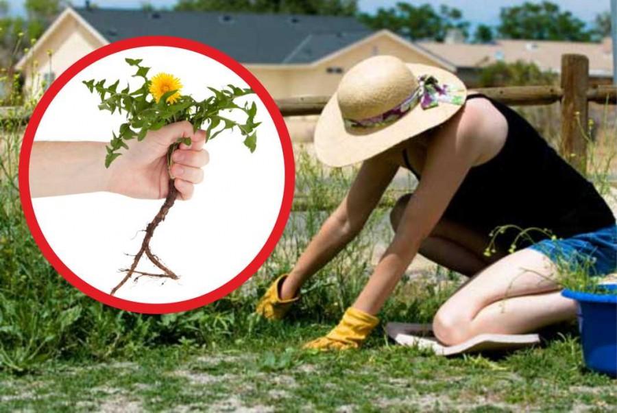 Te is utálsz gyomlálni? Íme 4 természetes gyomirtó módszer lusta kertészeknek!