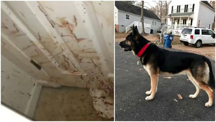 Hazaért a kutya gazdája és megdöbbenve látta, hogy mindenhol véres a fal