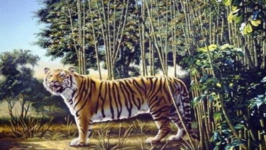 A feladat egyszerűnek tűnik, de nem az: találd meg a második tigrist a képen!