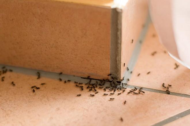 5 tipp, hogyan űzheted el a lakásból a hangyákat
