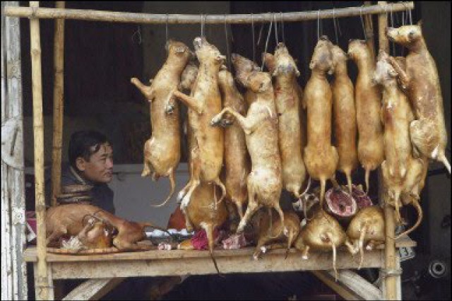 Kínában még mindig nem tilos a kutyahús értékesítés