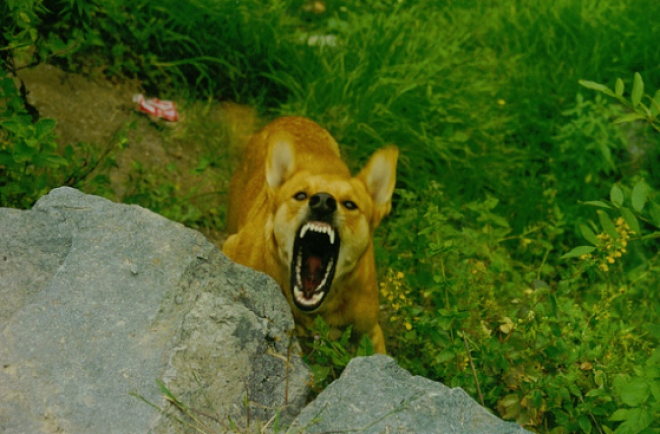 ÉLETET MENTHET, HA TUDOD! Mit tegyél, és mit ne tegyél, ha rád támad egy kutya?