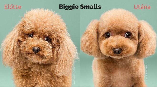 8 eszméletlenül cuki kutya fotója, kutyakozmetika előtt és után