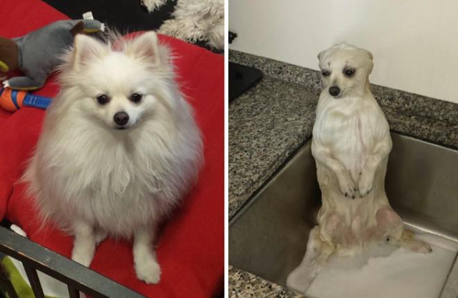 9 eszméletlenül aranyos kutyafotó, fürdés előtt és után