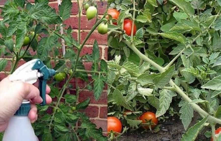 Ez mindenkit érdekelni fog, akinek kertje van!
