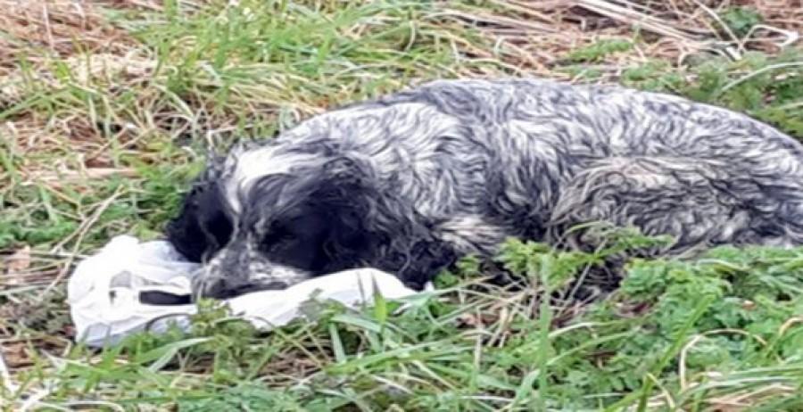 A férfi talált egy kutyát, ami egy nylon táskán feküdt. Amikor belenézett, azt hitte, megszakad a szíve.