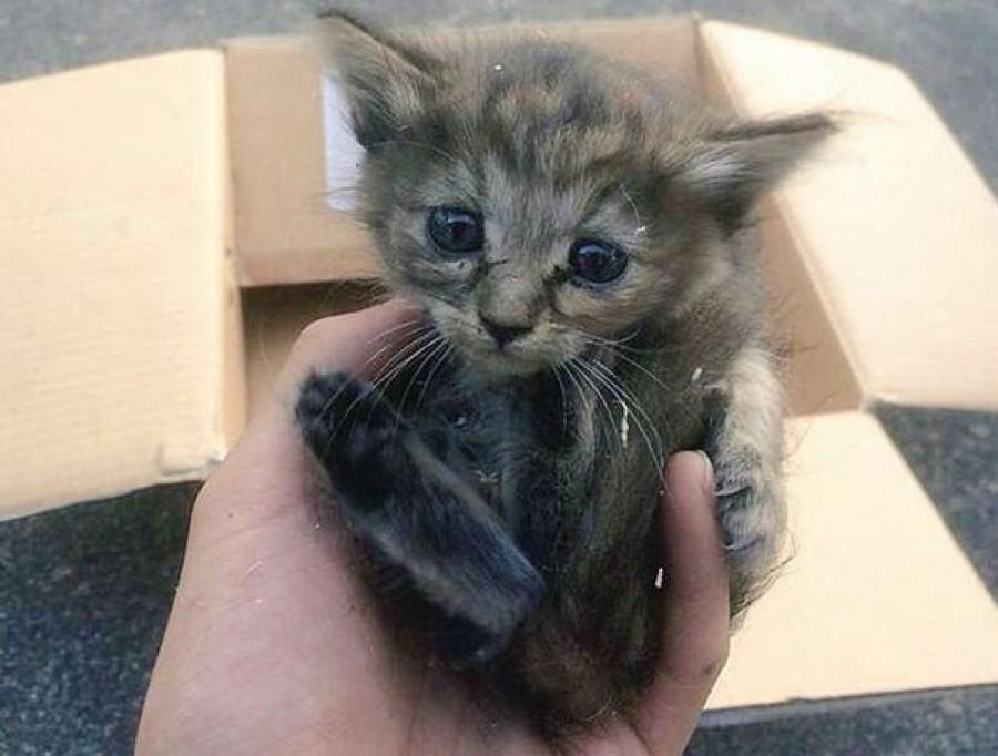 Találtak egy aranyos árva kiscicát, és hazavitték