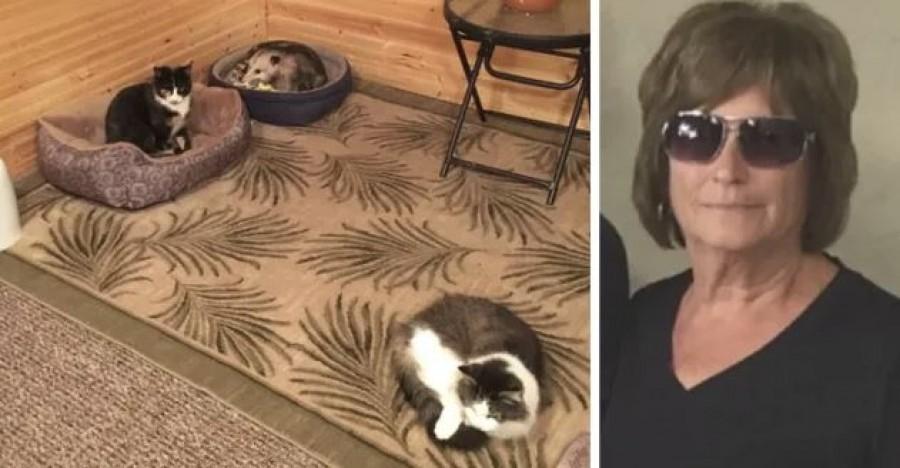 A nagymama azt hitte, hogy 3 macskája van, míg az unokája fel nem világosította...