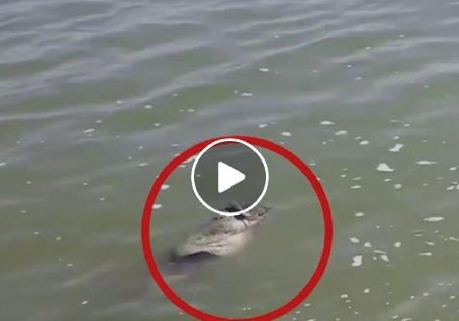 Megpillantottak egy hatalmas halat a víz tetején. Ahogy közelebb értek, ledöbbentek...