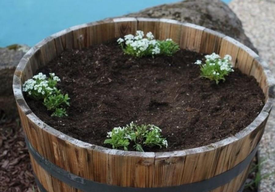 A család kinevette, hogy csak 4 növénykét ültetett a nagy dézsába